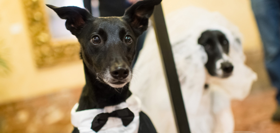 Puppy Love - An Extreme Valentine Package at the Pfister Hotel